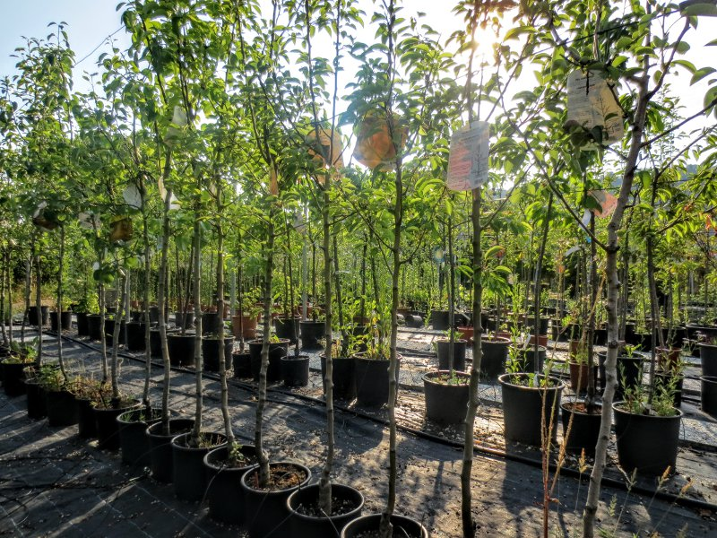 vivai_docci_piante