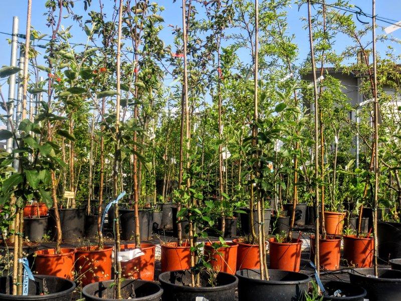 vivai_docci_piante_frutto